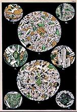 Litografie Bořického vlastnoručně broušených výbrusů melafyru